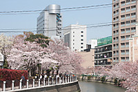Nakasuzakura00