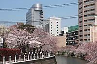 Nakasuzakura03