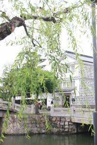 Yanagihamidori00
