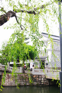 Yanagihamidori05