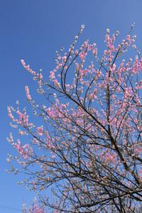 White_pink04