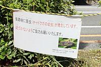 Cyadokuga02