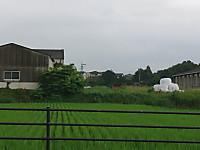 Tategoe