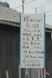Medaka_kubota