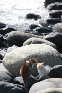 Himeshima_cats01