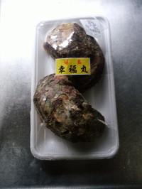 Iwagaki01
